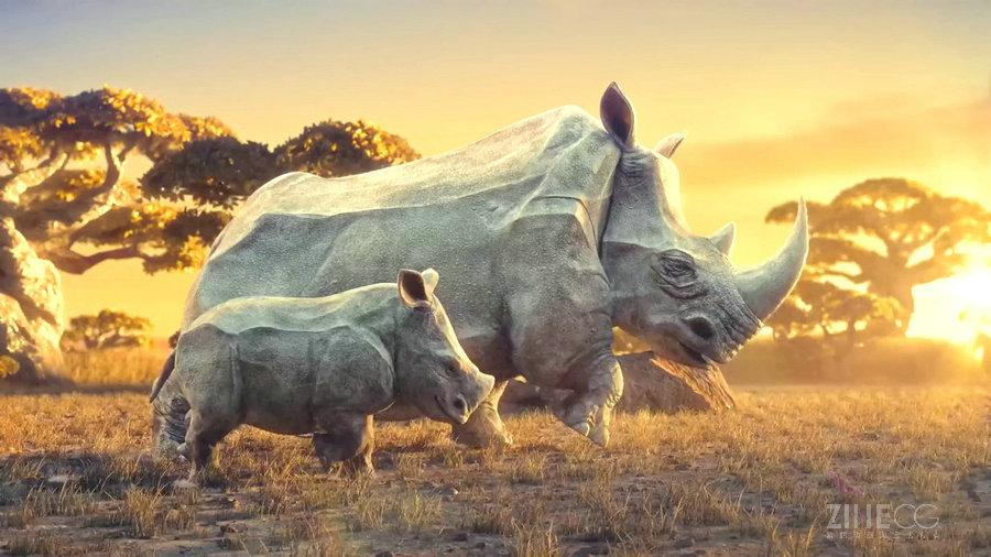 "WCFF野生动物保护公益视频宣传片""梦―Dream"""